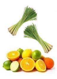 Citrónová tráva, citrusové plody